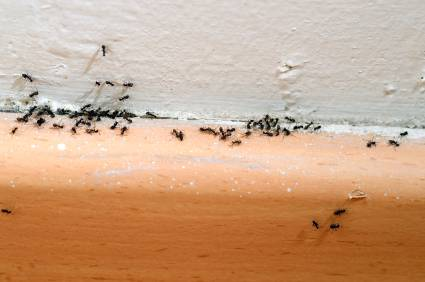 How a Lack of Ant Control Can Ruin Your Day